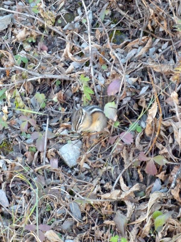 search the dangerous chipmunk