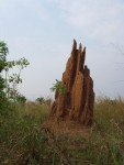 termite cathedral